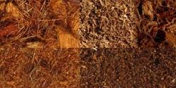 Pains de coco
