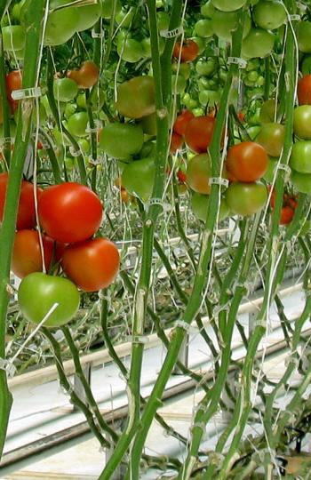 Solutec Agri